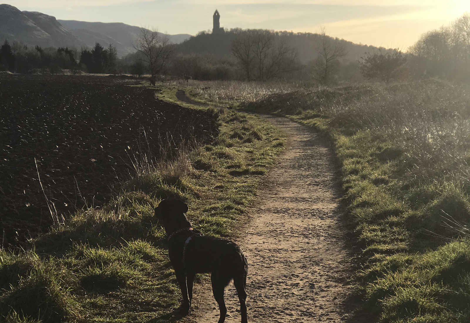 Dog on gravel path with monument in background